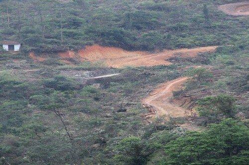 樟木头林场毁林造坟,殃及森林