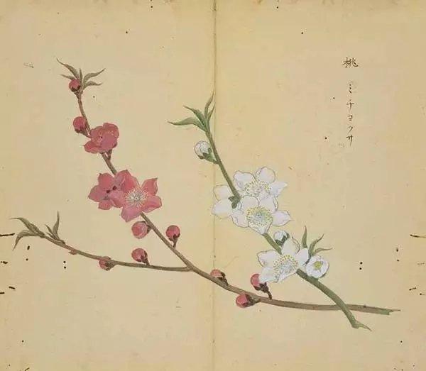 徽信花风景图片